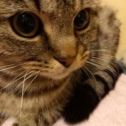 Животные - Найдена кошка, Москва, Оборонная улица , 0