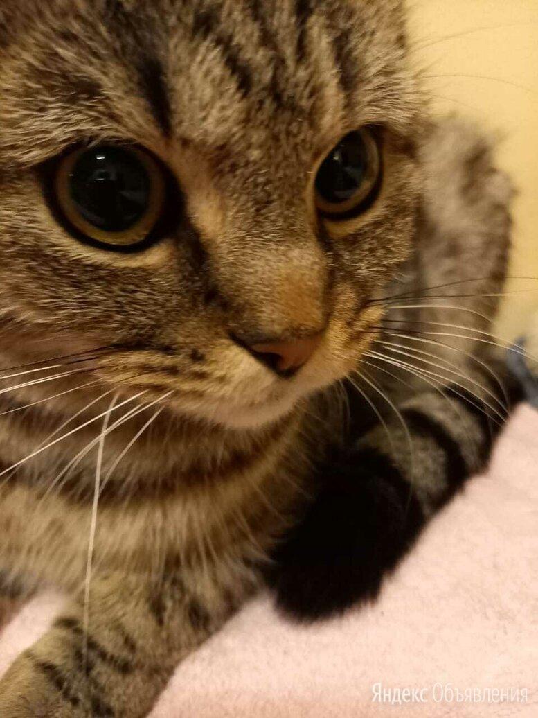 Найдена кошка, Москва, Оборонная улица  по цене даром - Животные, фото 0