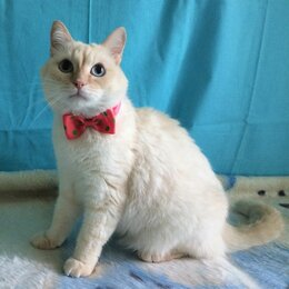 Кошки - Обаятельный котик в поиске дома, 0