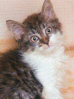 Кошки - Малыш Марлон грустно сидел на дороге, когда его…, 0