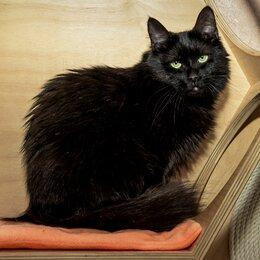 Кошки - Изящная и грациозная Графиня в добрые руки , 0