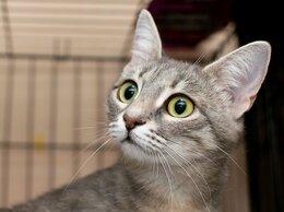Кошки - Любопытная активная кошечка Луизиана, 0