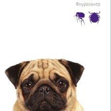Прочие товары для животных - Intervet Таблетка Бравекто инсектоарицидная для собак 4,5-10кг, 0