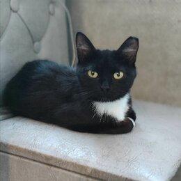 Кошки - Миниатюрная красавица хочет иметь семью! , 0