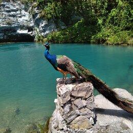 Экскурсии и туристические услуги - Экскурсия на о.Рица, в Абхазию, 0