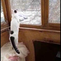 Животные - Пропал кот,Южный Автовокзал, 0