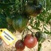 Семена по цене 3₽ - Семена, фото 4