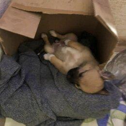 Животные - Выброшенные щенки в коробке, 0