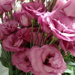 Цветы, букеты, композиции - Живые цветы от 70руб., 0