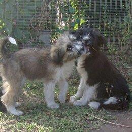 Собаки - Пушистые колобочки в самые добрые руки, 0