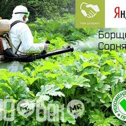 Прочие услуги - Уничтожение борщевика сосновского и сорной растительности, 0
