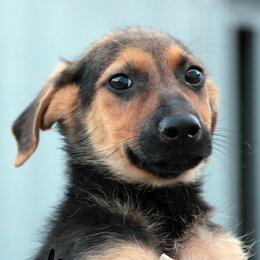 Собаки - Гарик ищет дом и заботливых хозяев!, 0