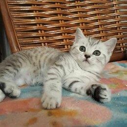 Кошки - Яся   изумительный нарядный плюшевый  котенок, 0