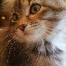 Кошки - Кошечка , 0