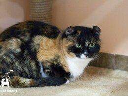 Кошки - Красавица Керлица ждёт любящую семью , 0