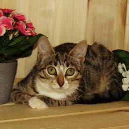 Кошки - Котенок 4 месяца ищет дом, 0