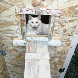 Лежаки, домики, спальные места - Домик для кошек и котят , 0