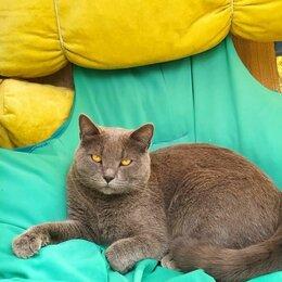 Животные - Потерялся кот , Вознаграждение 5000 рублей, 0