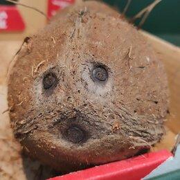 Подарочные наборы - Кокос с глазками, 0