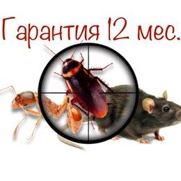 Бытовые услуги - Уничтожение тараканов клопов блох муравьев и др насекомых , 0