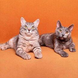 Кошки - Карамелька и Елисей, 0
