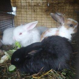 Кролики - Декоративные крольчата, 0