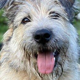 Собаки - КРАСОТКА ЛОЛА ИЩЕТ ДОМ, 0