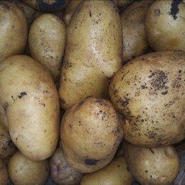 Лук-севок, семенной картофель, чеснок -  картофель семенной, 0