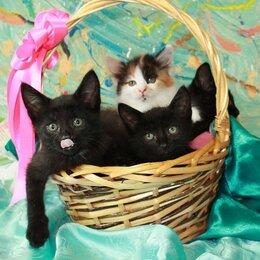 Кошки - Малышка Мими и три черных котика. Котята в добрые руки., 0