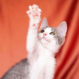 Кошки - В добрые руки - отважный Барс, 0