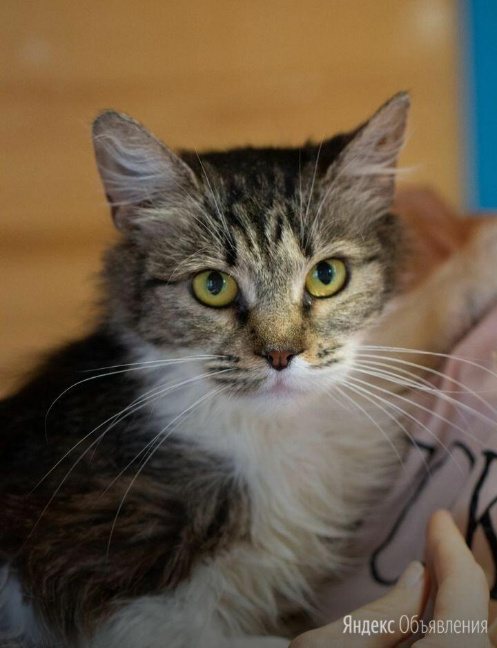 Славная ласкуша Бетти в дар  по цене даром - Кошки, фото 0