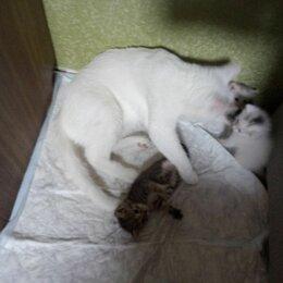 Кошки - Домашние животные, котята , 0