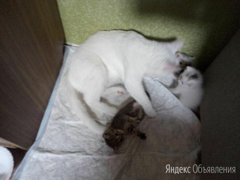 Домашние животные, котята  по цене даром - Кошки, фото 0