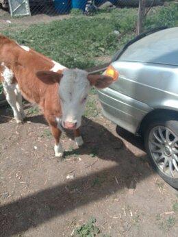 Сельскохозяйственные животные - Тёлочка, 0