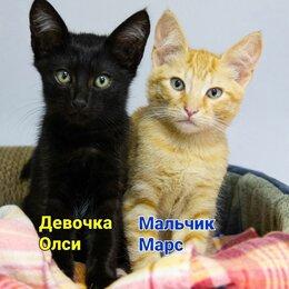 Кошки - Котята 3 месяца в добрые руки, 0