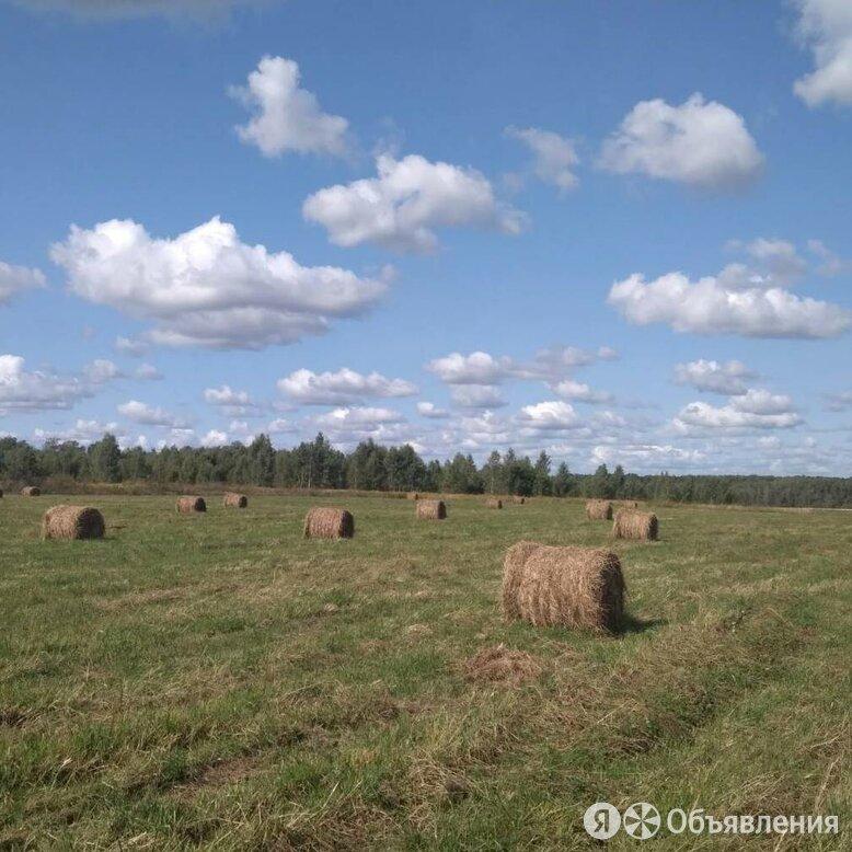 Сено люцерны. Урожай 2021. В рулонах по 120 кг. по цене 850₽ - Товары для сельскохозяйственных животных, фото 0