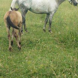 Лошади - Лошадь , 0
