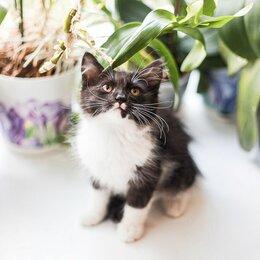 Кошки - Животные, 0