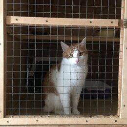 Услуги для животных - Гостиница для кошек (около Внуково), 0