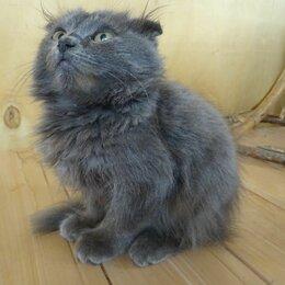 Кошки - Котята (  дети вислоухой кошечки ), 0
