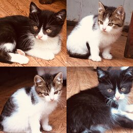 Кошки - Котята в хорошие руки , 0