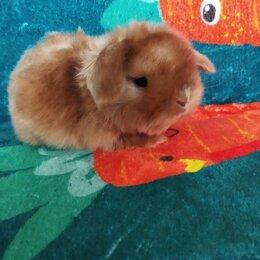 Кролики - Крольчонок мальчик сатин, 0