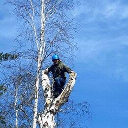 Бытовые услуги - Чистка участков!спил деревье любой сложности. , 0