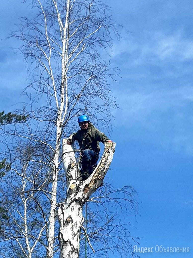 Чистка участков!спил деревье любой сложности.  по цене 500₽ - Бытовые услуги, фото 0