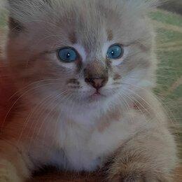 Кошки - Отдам в хорошие добрые руки очаровательных котят, 0