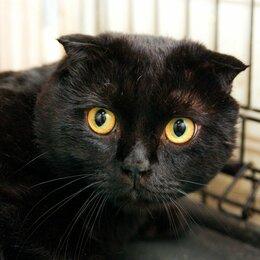 Кошки - Плюшевый котик Тофу, 0
