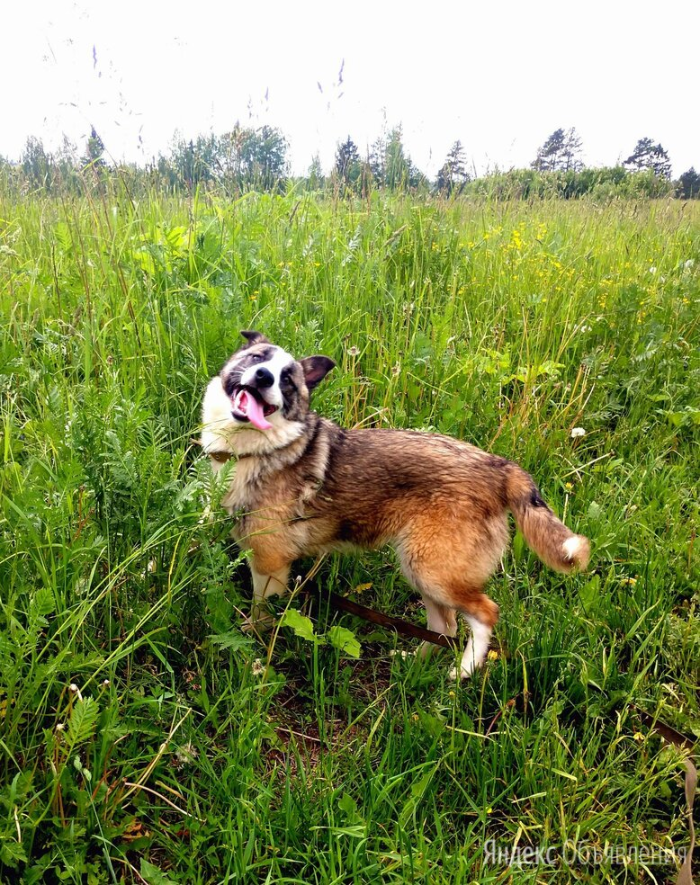 Мона, озорная и позитивная, 1 год по цене даром - Собаки, фото 0