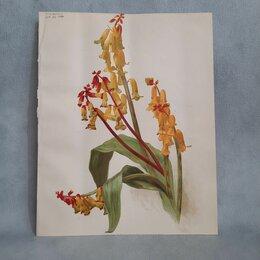 Гравюры, литографии, карты - Литографии цветы, 0