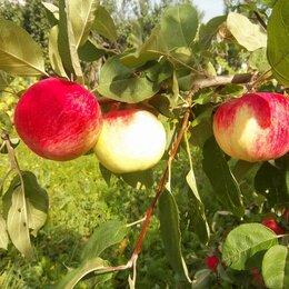Продукты - Яблоки, 0