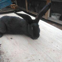 Кролики - Продам кроликов, 0